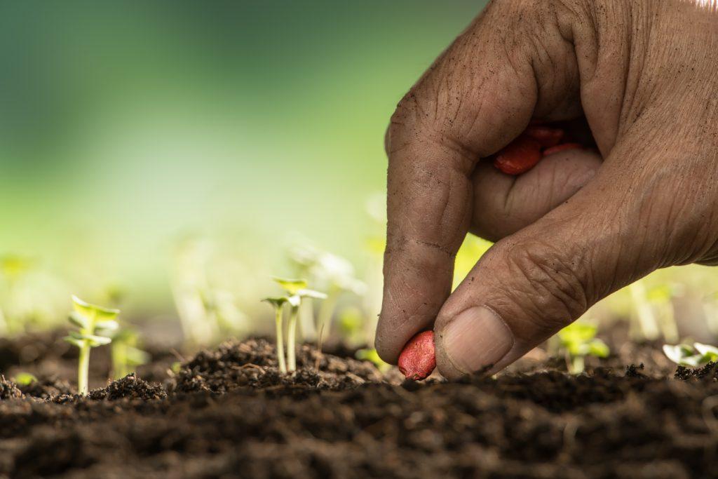 Monetyzacja produktu lub usługi jest jak podlewanie rośliny